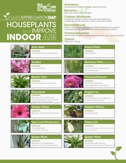 Houseplants That Improve Indoor Air
