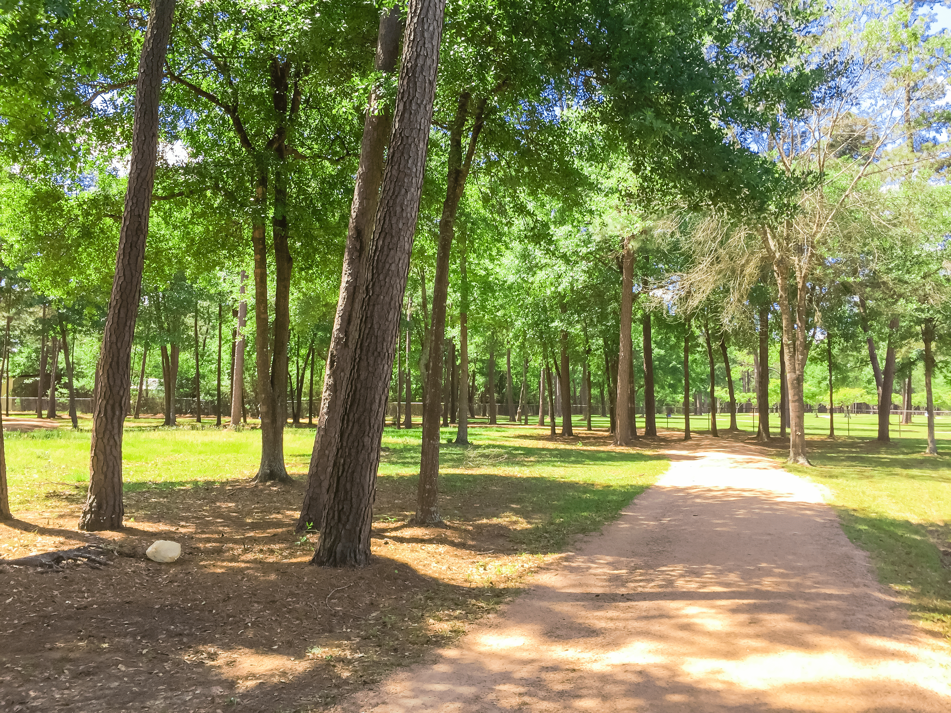 Summer in a Humble, TX Park